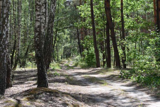 чистый воздух в лесу